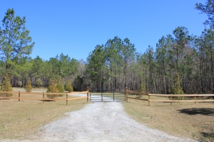 National Forest 45 Acre Retreat - Berkeley County SC