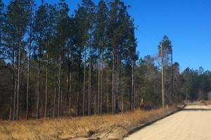 25 Acre Mt. Pisgah Recreational Investment - Kershaw County SC