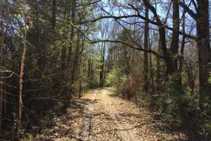 Maben 106 Timber, Recreation, Homesite