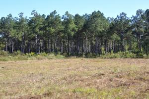 Upper Big Black River 592 Acres - Webster County MS