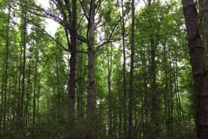 114 ac. Timberland and Hunting Tract  in Jefferson Davis, MS (2 of 7)