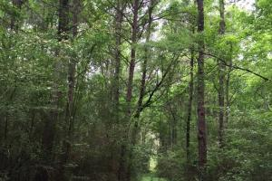 114 ac. Timberland and Hunting Tract  in Jefferson Davis, MS (4 of 7)