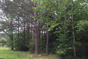 114 ac. Timberland and Hunting Tract  in Jefferson Davis, MS (5 of 7)