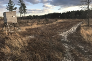 Barnwell Small Hunting & Future Timber Investment - Barnwell County SC