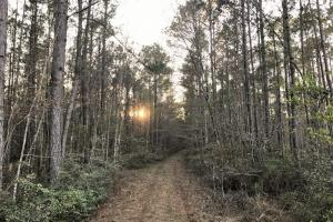 Ridgeland Hunting & Recreational Land - Jasper County SC