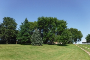 <p>Nice established trees as you drive up to homestead!</p>