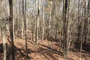 Bastic Creek Hunting & Timber Investment - Pickens County AL