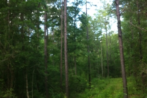 50 acres on Graves Creek in Marion, MS (2 of 9)