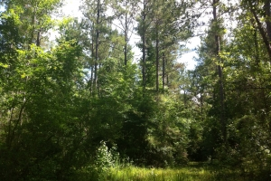 50 acres on Graves Creek in Marion, MS (3 of 9)