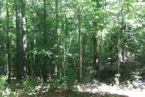 50 acres on Graves Creek in Marion, MS (4 of 9)