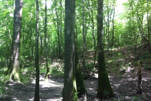 50 acres on Graves Creek in Marion, MS (5 of 9)