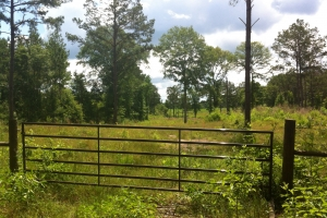50 acres on Graves Creek in Marion, MS (6 of 9)