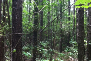 50 acres on Graves Creek in Marion, MS (7 of 9)