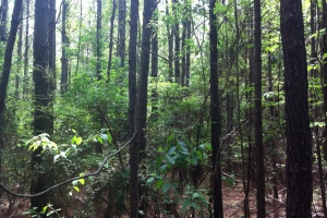 50 acres on Graves Creek in Marion, MS (8 of 9)