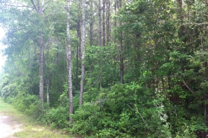 50 acres on Graves Creek in Marion, MS (9 of 9)