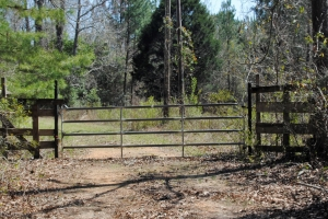 Providence Road Tract - Marengo County AL