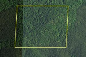 Piedmont Timber Tract - Cleburne County AL