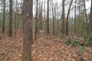 60 acre Hunting Refuge - Madison County MS