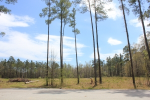 Bonneau Gated Community Large Acreage Lot