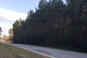 Wire Road Timber with Residential Opportunity - Stone County MS