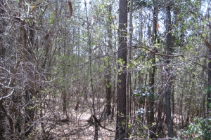 39+/- acres with Great Timber Investment South of Meridian - Clarke County MS