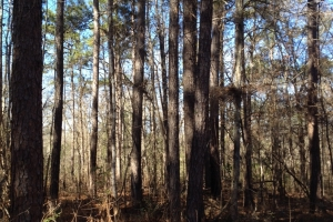 Timber and Hunting Tract Lamar County - Lamar County MS