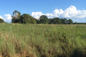 40 Acres old field with timber in Forrest, MS (1 of 3)