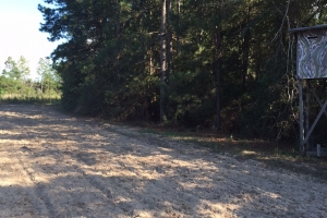 40 Acres old field with timber in Forrest, MS (3 of 3)