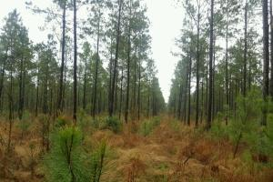 Burgaw Hunting Land - Pender County NC