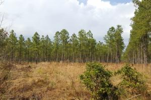 Burgaw Hunting Land with Timber - Pender County NC