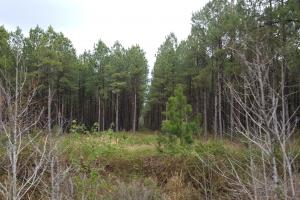 Stag Park Hunting Land and Timber Investment - Pender County NC