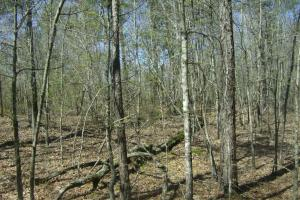 Cane Creek Timber and Hunting Tract 2 in Pulaski, AR (3 of 13)