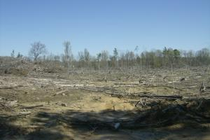 Cane Creek Timber and Hunting Tract 2 in Pulaski, AR (5 of 13)