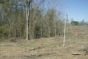 Cane Creek Timber and Hunting Tract 2 in Pulaski, AR (6 of 13)