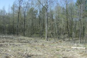 Cane Creek Timber and Hunting Tract 2 in Pulaski, AR (4 of 13)