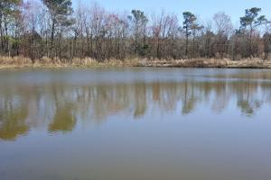Homesite and Hog Farm Opportunity - Pender County NC