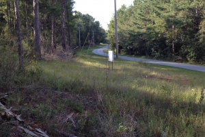 Timber investment with lake - Forrest County MS