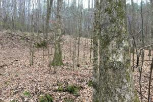 Timber Investment and Hunting in Franklin, Marion, and Winston Counties - Franklin County AL