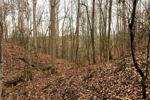 Bear Creek Homesite and Recreational Property - Franklin County AL