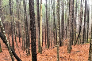 New River Timber Investment - Marion County AL