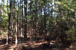 24.4 acres Pearl River - Pearl River County MS