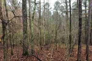 Smith Lake Recreation and Timber Property - Winston County AL