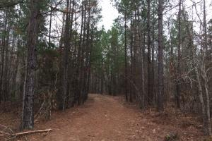 64+/- Acres Timberland/Development on Highway 7