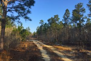Darlington Line Timber Investment in Darlington, SC (2 of 11)