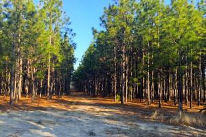 Darlington Line Timber Investment in Darlington, SC (5 of 11)