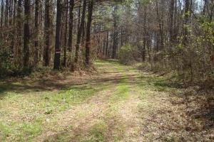 Big Brush Creek Hunting Retreat - Hale County AL