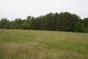 Akron Mini-Farm  80 Acres - Hale County AL