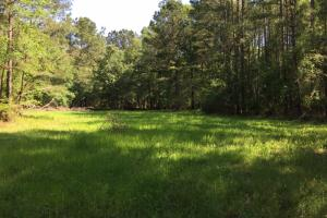 Food Plot (18 of 40)