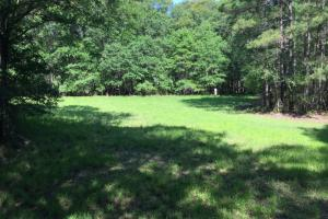 Food Plot (8 of 40)
