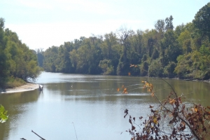 Alabama River Cut-Off Tract - Clarke County AL